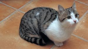 猫大王的姐妹?