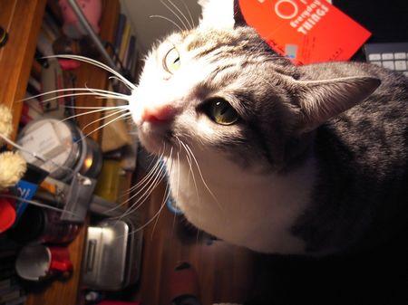 灯光下的猫大王
