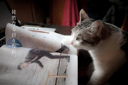 阅读中的猫大王 By Jet