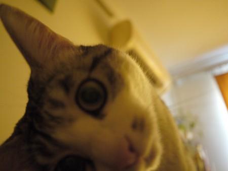 猫大王的萌照-2