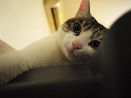 猫大王的萌照-1